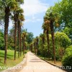 Аллея пальмовая в Воронцовском парке